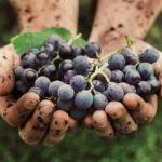 Azienda agraria Montespinello Daniele Rossi vini Torgiano produzione